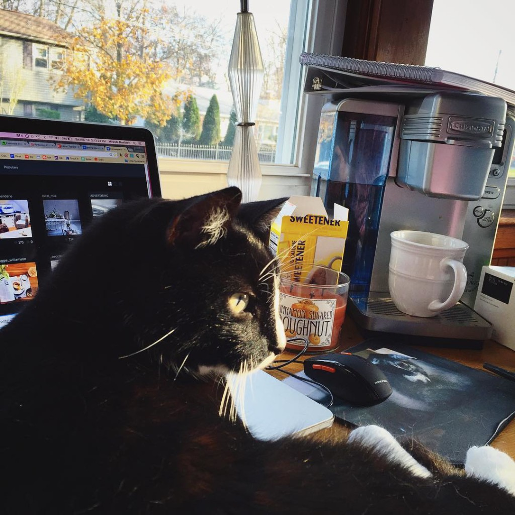 Cat, candle, coffee, and computer...really, what more do I need on this beautiful #work day?  #workfromhome #cat #catsofinstagram #catstagram #cats #kitty #catlife #aww